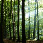 beech_woodland