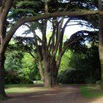 cedar-tree-woodland