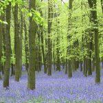img_mike_bean_woodland02