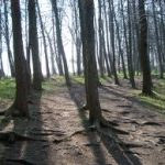 light through woodland
