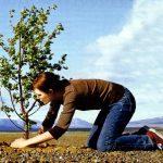 planting_trees